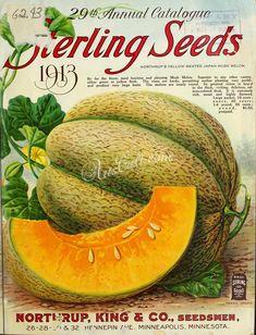 Northrup King & Co Seedsman Catalogue - Sterling Seeds - 1913 Garden Catalogs, Seed Catalogs, Seed Art, Vegetable Illustration, Vintage Seed Packets, Garden Labels, Sprouting Seeds, Seed Packaging, Vintage Gardening