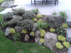 Perfect One Of The Small U0027rocku0027 Gardens; Rhodo Impeditum, Soleirola Soleirolii And  Sisyrinchium