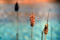 Harsh Nature by Ronaldo F Cabuhat, via Flickr