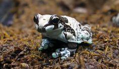 Beautiful little frog in Tallinn's Zoo    #tallinn #estonia www.tallinn.com