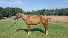 This finished reiner is ready to work cattle, see his ad on Equine.com today!