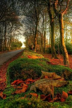Beautiful World, Beautiful Places, Peaceful Places, Autumn Scenes, Fall Pictures, Nature Pictures, Best Seasons, Fall Harvest, Fall Season