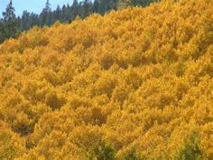 Fall Foliage Scenery - Bing images