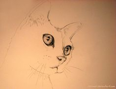 Cat by kleinmeli.deviantart.com
