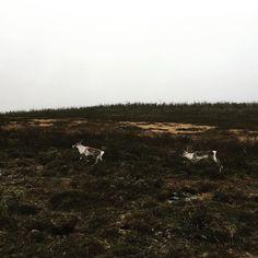 Jumpin Rudolfs #karasjok @northernnorway #finnsta #nrkfinnmark