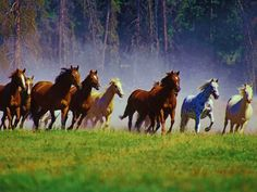 Wild Horses Can Be Killed By The Government! An advisory board just voted to euthanize wild horses. Pretty Horses, Horse Love, Beautiful Horses, Animals Beautiful, Tier Wallpaper, Horse Wallpaper, Animal Wallpaper, Wallpaper Pictures, Computer Wallpaper