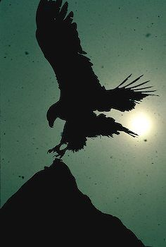 The eagle flies above the storm and sees beyond the horizon. Vision. Foresight. Clarity.