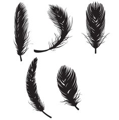 Feather Free Vectors - Free Vector Site   Download Free Vector Art, Graphics