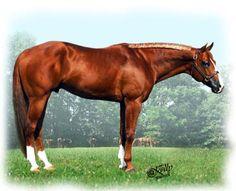 BSB Quarter Horses - AQHA Stallion Too Sleepy To Zip