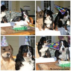 Goliath turned five so we decided to have a little party. Normally mom doesn't get a cake but Goliath had a rough year and our new girl Beth...