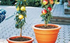 66 fruits and vegetables you can grow at home in containers without a garden