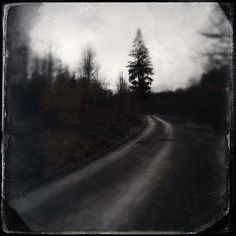 Path through the dark and mystic forest, black and white art square format with antique wetplate texture effect, captured with Hipstamatic App. Click here to buy a poster, art print or canvas print: http://instaprints.com/featured/path-in-the-dark-forest-and-conifer-tree-matthias-hauser.html 30 days money back guarantee. (c) Matthias Hauser hauserfoto.com #mood