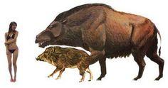 Prehistoric animals: Daeodon. Pig or boar terrible.