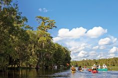 Paddling Around the Big Bend - Tallahassee Magazine - September-October 2016