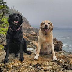 """#ashleeandtexas at Otter Cliffs, Acadia National Park"" writes @micmacmon #dogsofinstagram #instagood #FF #tagforlikes"