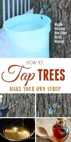 Gardening For Beginners How to tap trees in your garden for sap to make homemade syrup - How home gardeners can tap trees for sap to produce their own syrup. Trees that produce sap for syrup include maple, hickory, birch, and walnut. Gardening For Beginners, Gardening Tips, Gardening Vegetables, Hydroponic Gardening, Homemade Syrup, Easy Garden, Garden Art, Tower Garden, Wild Edibles