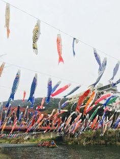 300匹も鯉のぼりが泳いでいる  佐賀県の川上峡春祭り