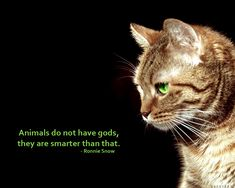 Images For > Compassion For Animals Quotes