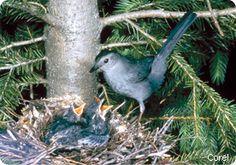 Certify Your Wildlife Habitat