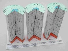 Geyser formation a scale paper model from the Geoblox book 'Groundwater Block Models' Science Models, 4th Grade Science, Online Pharmacy, Paper Models, Activities, Geology, Teacher Stuff, Kid Stuff, Projects