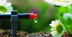 Drip #irrigation system for #backyard. Check complete guide for drip irrigation installation.