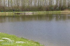 Forelvissen_voorjaar_wim2