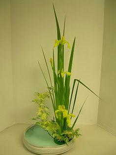 Orchids and Ikebana: Iris Arrangement