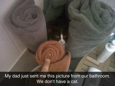 The Mystery Cat