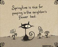 Cat Springtime