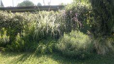 Gruppo di erbacee perenni del mio giardino