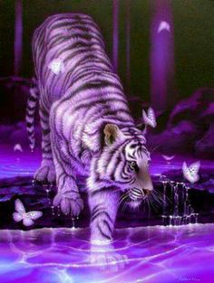 Tigers and butterflies