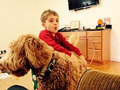 Visiting the nephews.  #indythegoldendoodle Therapy dog in training.
