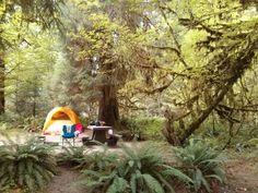 Camping in Washington State& Hoh Rainforest: what to know before you go! Camping Places, Camping Spots, Camping Glamping, Camping World, Outdoor Camping, Camping Cabins, Camping Gear, Backpacking, Oregon Coast Camping