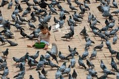 Prakash Mathema/Agence France-Presse/Getty Images    PLAYING WITH PIGEONS: A child sat amid pigeons in Durbar Square in Katmandu, Nepal, Thursday.   Photos of the Day: Sept. 6 - WSJ.com