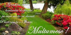 Felicitari de multumire - Multumesc! Stepping Stones, Outdoor Decor, Plants, Stair Risers, Planters, Plant, Planting