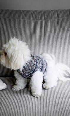 Koiran Villapaita Heijastava Neule Pitaa Lemmikkisi Lampimana Tuulissa Ja Tyrskyissa Koiran Vaatteita Koira