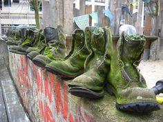 shoe plants?