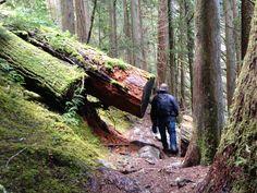 Hubby hiking up to Skookum Falls