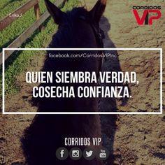 Exacto.!  ____________________ #teamcorridosvip #corridosvip #corridosybanda #corridos #quotes #regionalmexicano #frasesvip #promotion #promo #corridosgram - http://ift.tt/1HQJd81
