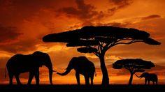 Silhouette Elephants In The Sunset  #landscapes #nature #animals #leopards #sun #kenya #Kenyans #KOT #Safari