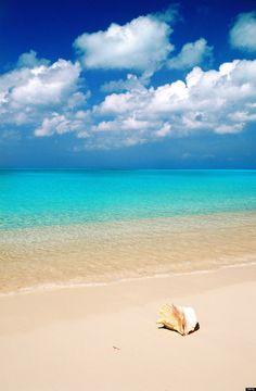 Lovely beach and shell Most Beautiful Beaches, Beautiful World, Beautiful Places, Bahamas Island, Island Beach, Long Island, Sunny Beach, Ocean Beach, Places To Travel