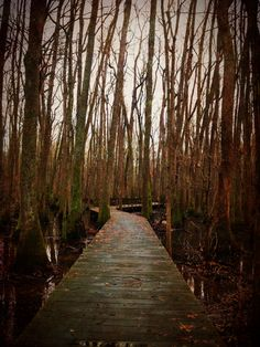 The Tupelo swamp near our house. Such an incredible place for inspiration! If there is magic anywhere in Huntsville, it's all right here.