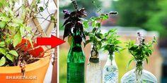 Πως να Διατηρήσετε τα Βότανα του Κήπου σε Βάζο με Νερό στο Σπίτι κατά τη διάρκεια του Χειμώνα! Glass Vase, Bottle, Garden, Crafts, Home Decor, Garten, Manualidades, Decoration Home, Room Decor