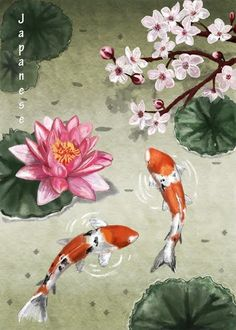 Koi, lily and blossoms