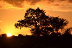 Zonsondergang - Kruger national parc
