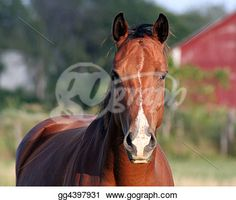 Horse breeding Stock Photos and Images. horse breeding pictures and royalty free photography available to search from over 100 stock photo brands. Brown Horse, Horse Horse, Horse Photos, Horse Breeds, Beautiful Horses, Art Images, Clip Art, Free Photography, Stock Photos
