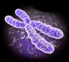 modern surgery: What is the X Chromosome?