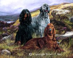 Setters | Irish, English and Gordon Setter painting , limite… | Flickr