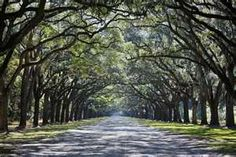 ride a bike in the middle of summer down a tree lined street.