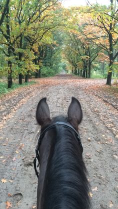 Loving this time of the year, especially as seen between the ears of my favorite horse